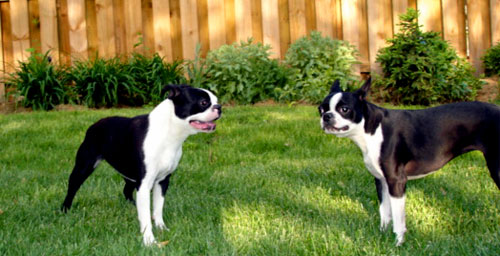 Elsa and Zoey in the grass